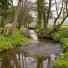 The young River Chew, South Widcombe